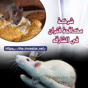 شركة مكافحة الفئران الشارقة   0504019051