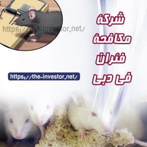 شركة مكافحة الفئران دبي   0504019051
