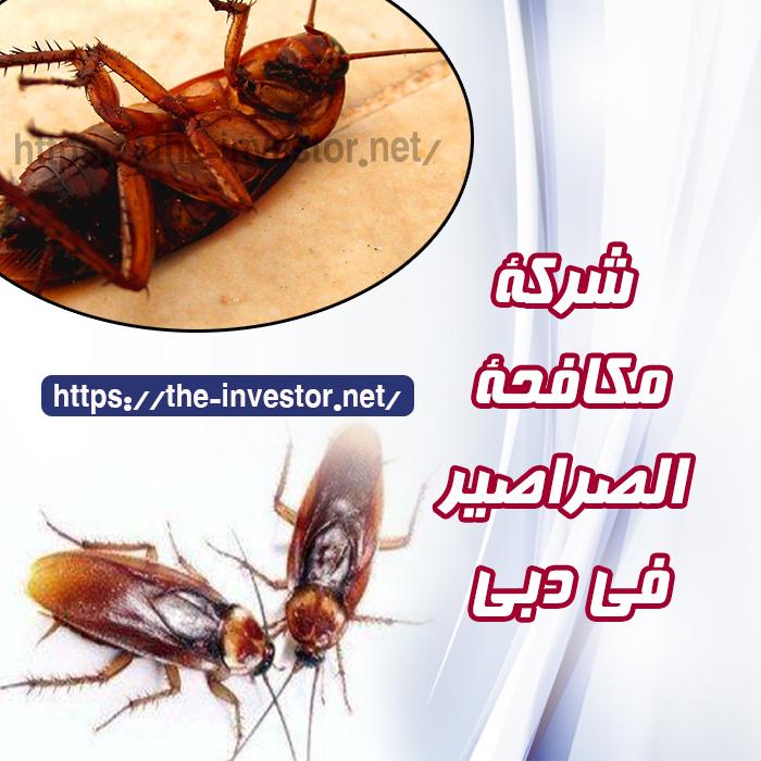 شركة مكافحة صراصير دبي