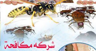 شركة مكافحة حشرات العين