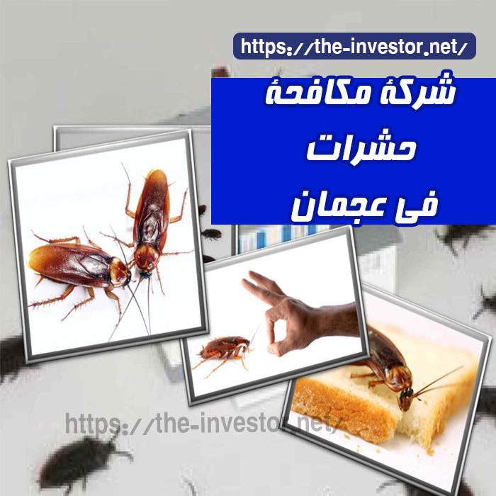 شركة مكافحة حشرات في عجمان